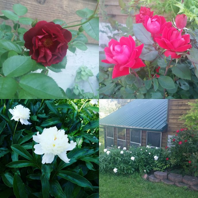 The flowers in our garden.